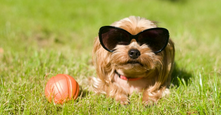 No dejes que tu perro sea un mimado (Foto: iStock)