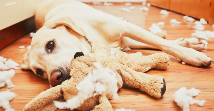 Tienes que regañar a tu mascota aunque no te guste (Foto: iStock)