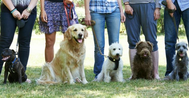 Conocerás a un montón de gente con mascotas (Foto: Istock)