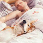 La cama es uno de sus lugares preferidos (Istock)