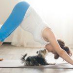 El yoga relajará a tu mascota (Istock)