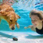 ¿Quién dijo que los perros no nadaban? (Istock)