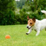 Los perros adoran jugar (Istock)