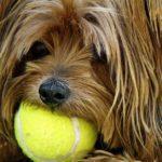 Pelotas de tenis (Pixabay)