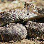 Las serpientes (Iscotk)