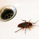 Las cucarachas (Istock)