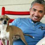 Coco, el chihuahua de Cesar Millán, el encantador de perros (Instagram)