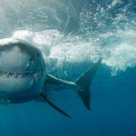 Los tiburones (Istock)