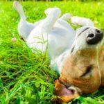 Limpia las patitas de tu mascota cuando volváis de paseo (Istock)