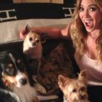 Lola, la chihuahua de Hilary Duff (Instagram)