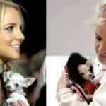 Bit bit, el chihuahua de Britney Spears (Instagram)