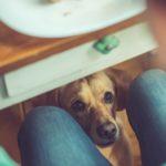 No le des comida de humanos mientras comes (Istock)