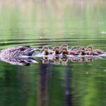 4. Nadando con mamá (Istock)