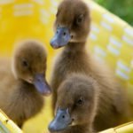 5. Los tres hermanitos de color marrón (Istock)