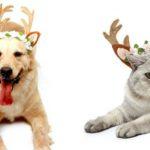 5. Diadema de cuernos de reno para perro y gato de Amazon