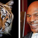 Mike Tyson y su amor por los tigres de Bengala (Istock/Gtresonline)