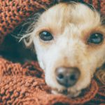 4. Cuando bañes a tu perro asegúrate de secarlo bien (Istock)