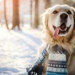 5. Viste a tu mascota si vais a salir a la calle(Istock)