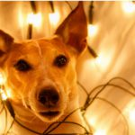 5. Las luces (Istock)