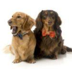 Pajaritas para perros de Regalosparamascotas