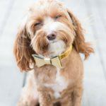 Concurso de perros sin raza ANAA (Istock)