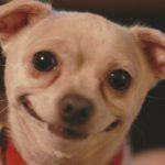 Concurso de las mascotas más divertidas del mundo (Istock)
