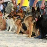 Concurso de obediencia (Istock)