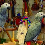En las tiendas de animales hay multitud de juguetes (iStock)