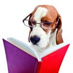 Los animales pueden ser muy inteligentes (iStock)