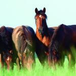 Los caballos son unos animales extraordinarios (iStock)