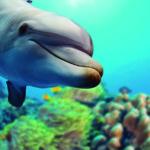Los delfines son de los animales acuáticos más inteligentes (iStock)