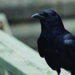 Un ave especialmente lista (iStock)