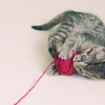 A los gatos les encanta jugar (iStock)