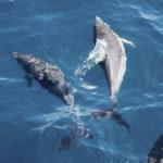 Los delfines son de los animales más inteligentes, quizá pasar tanto tiempo en la tripa tiene algo que ver (Unsplash)