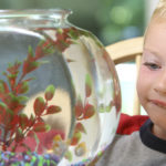 Un pez es una buena primera mascota (iStock)