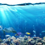 Acuario con variación de peces (Foto: iStock)