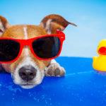 10 juguetes acuáticos para que tu mascota se divierta en verano