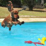 3. Introducir juguetes en el agua (Istock)