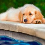 5 pasos para que tu perro pierda el miedo al agua (Istock)
