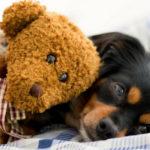 8 juguetes para calmar la ansiedad de tu perro (Istock)
