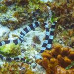 6. Serpiente marina de Blecher