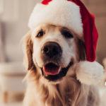 Perro con gorro de Papá Noel (Foto: iStock)
