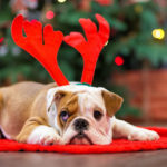 Perro con diadema navideña (Foto: iStock)